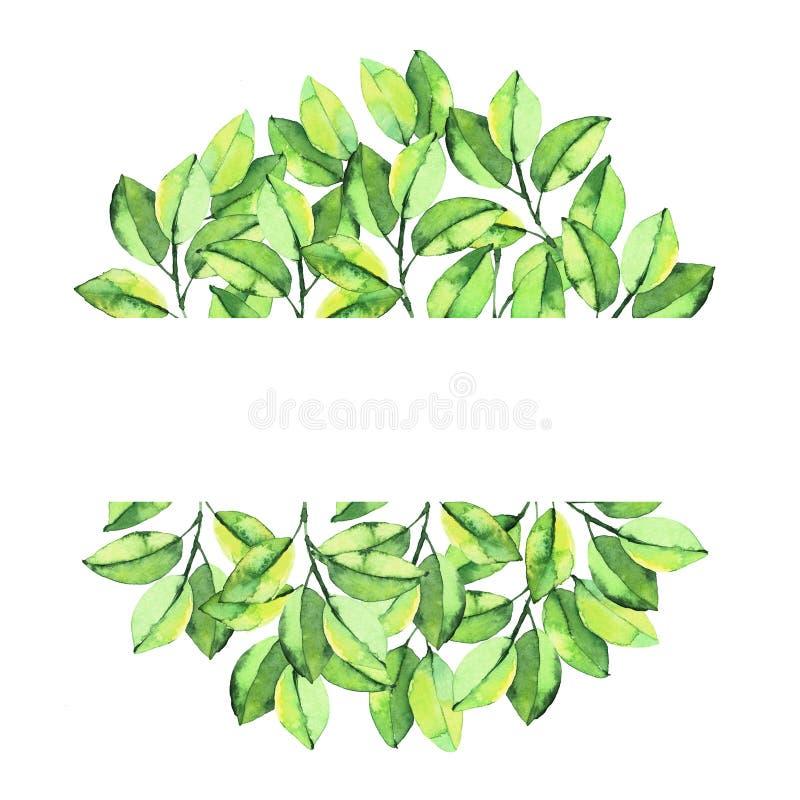Grünes Aquarell verlässt ringsum Zusammensetzungshintergrund lizenzfreie abbildung