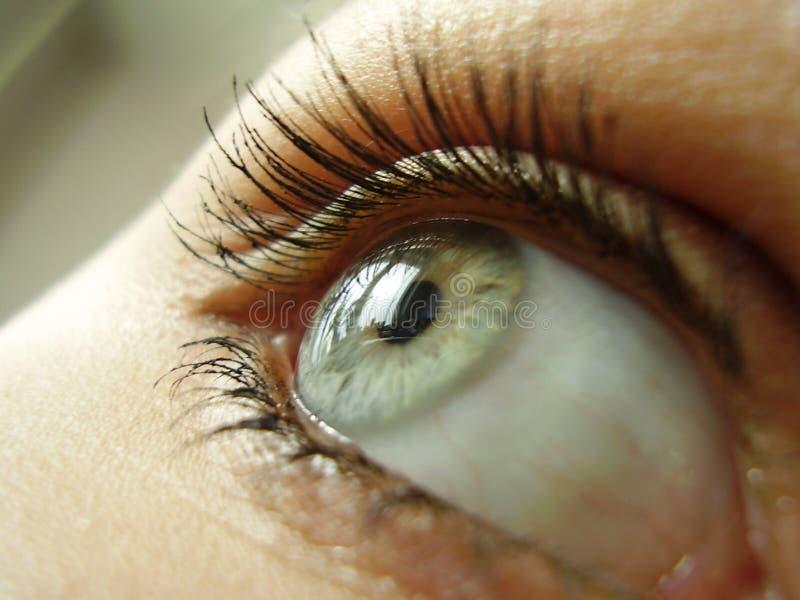 Grünes Auge stockbilder
