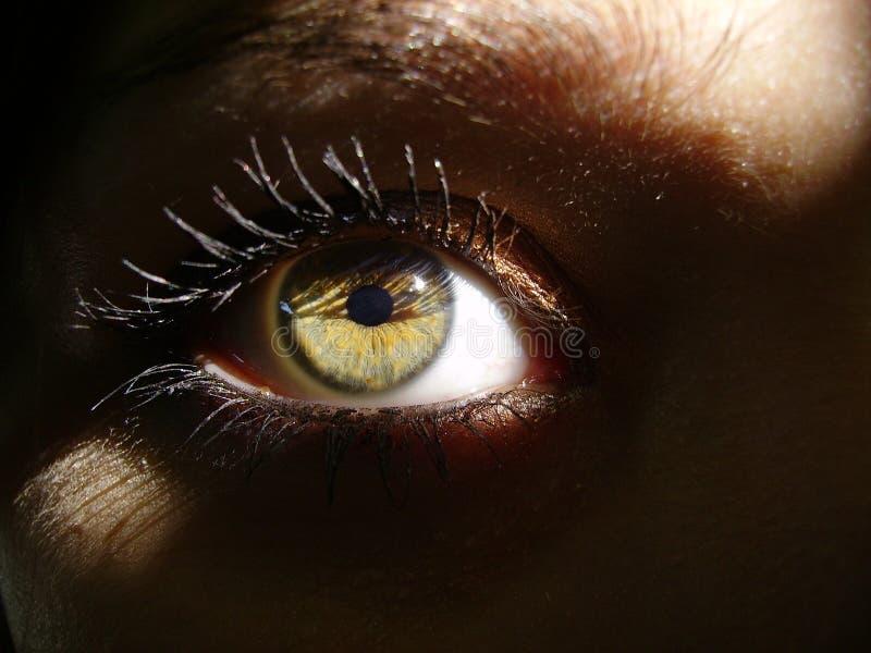 Grünes Auge im Schatten lizenzfreie stockfotos