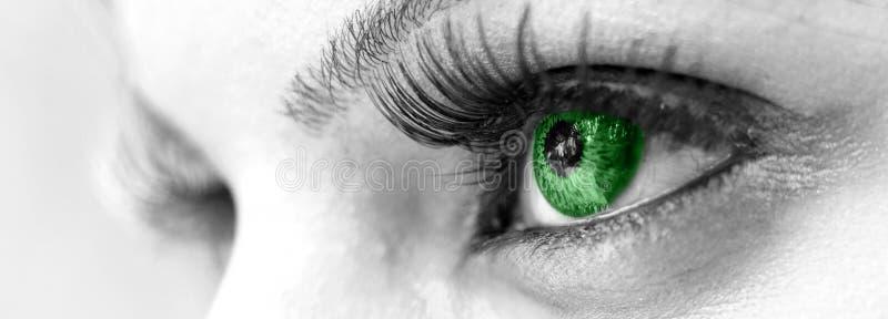 Grünes Auge - schön, weiblich stockfotos