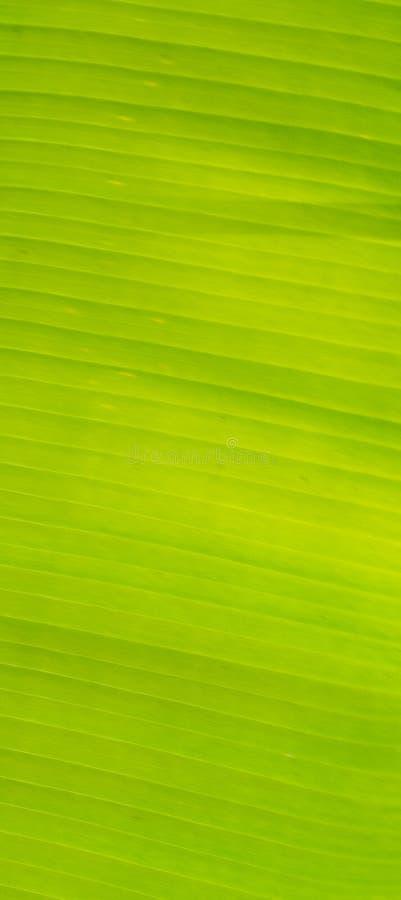 Grünes Bananenblättermuster stockbilder