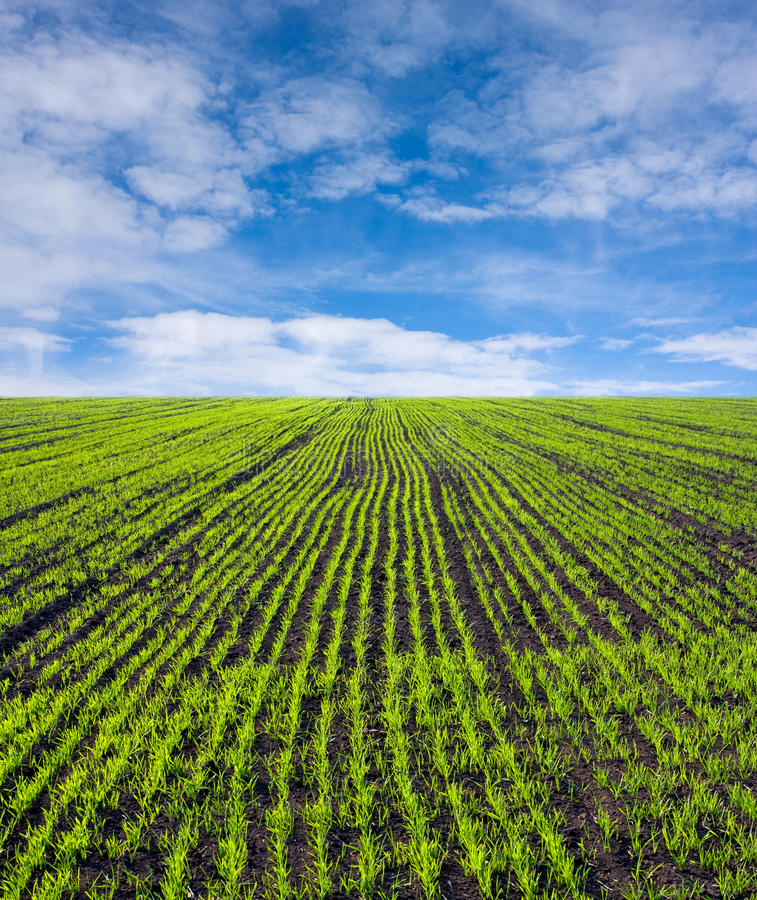 Grünes Bauernhoffeld lizenzfreie stockbilder