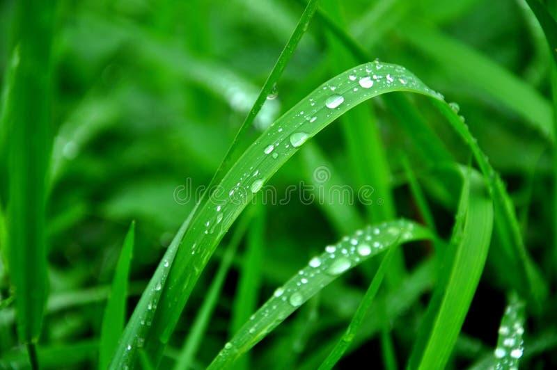 Grünes belaubtes, nasses Naturkonzept stockbild