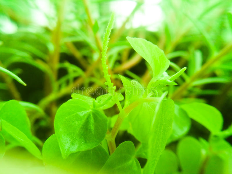 grünes Blatt stockbild