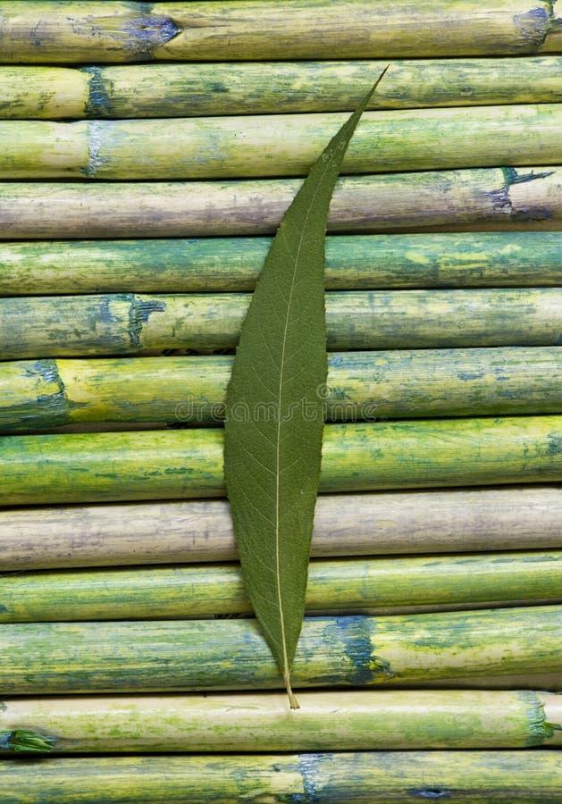 Grünes Blatt auf Bambus lizenzfreie stockbilder