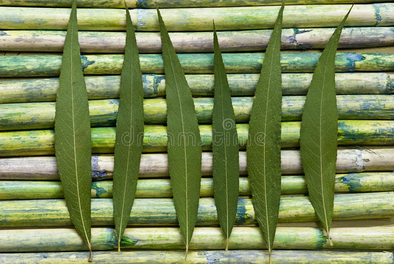 Grünes Blatt auf Bambus stockfoto