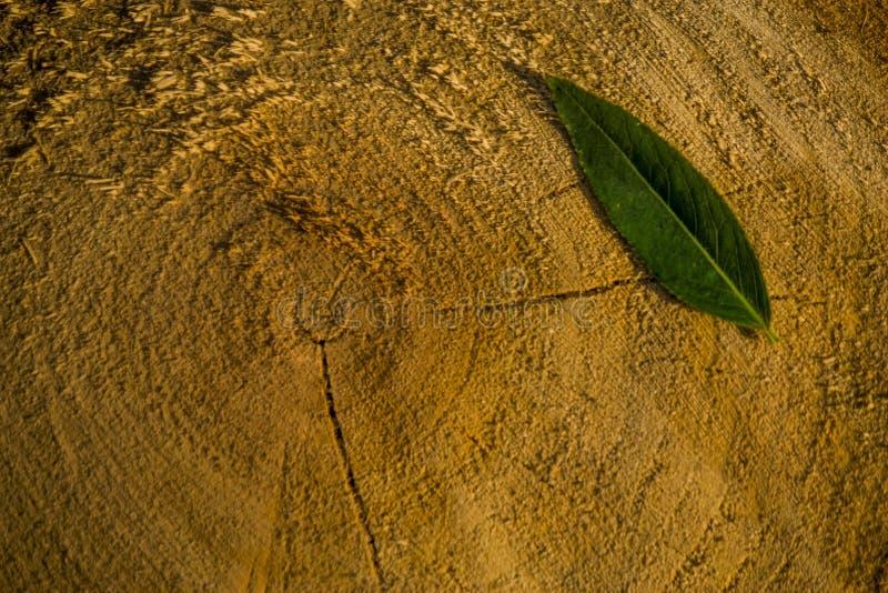 Grünes Blatt auf einem Baumstumpf lizenzfreies stockfoto