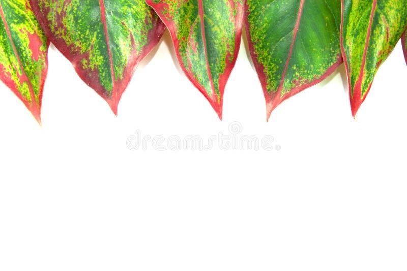 Grünes Blatt auf Weiß lizenzfreie stockfotografie