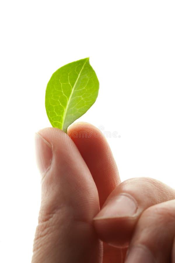 Grünes Blatt in den Fingern lizenzfreie stockfotografie