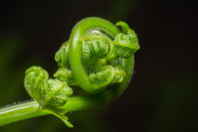 Grünes Blatt des Farns lizenzfreie stockfotografie