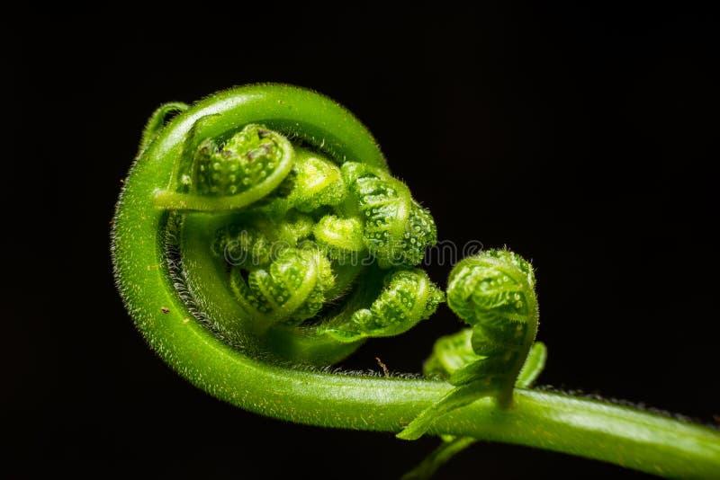 Grünes Blatt des Farns lizenzfreies stockbild