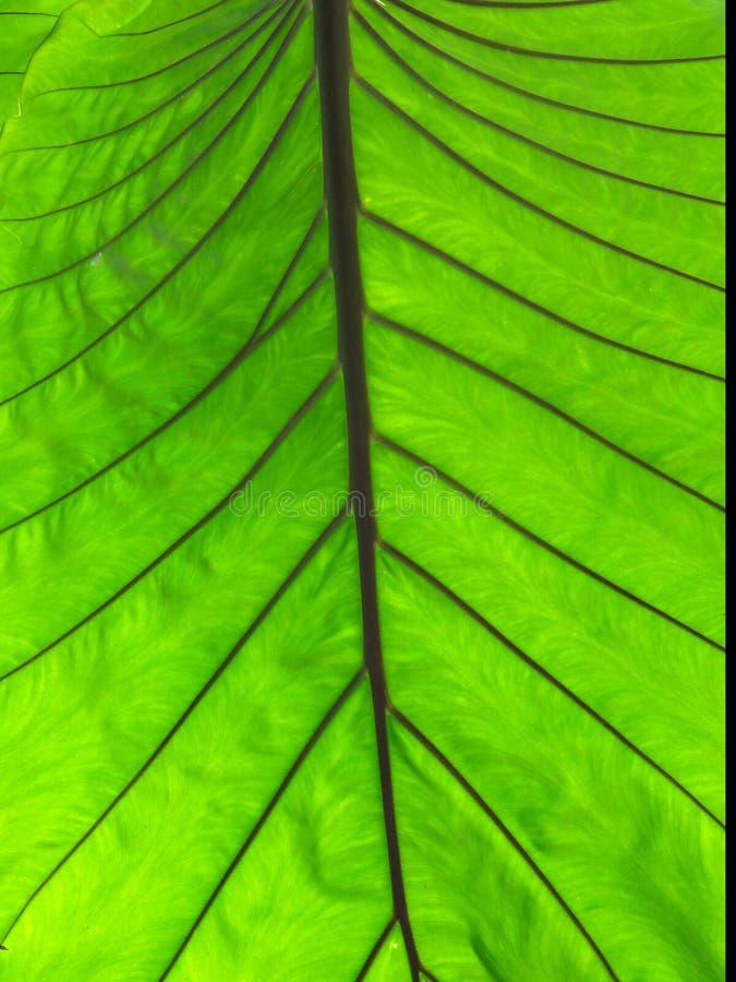 Grünes Blatt - Makro stockbilder