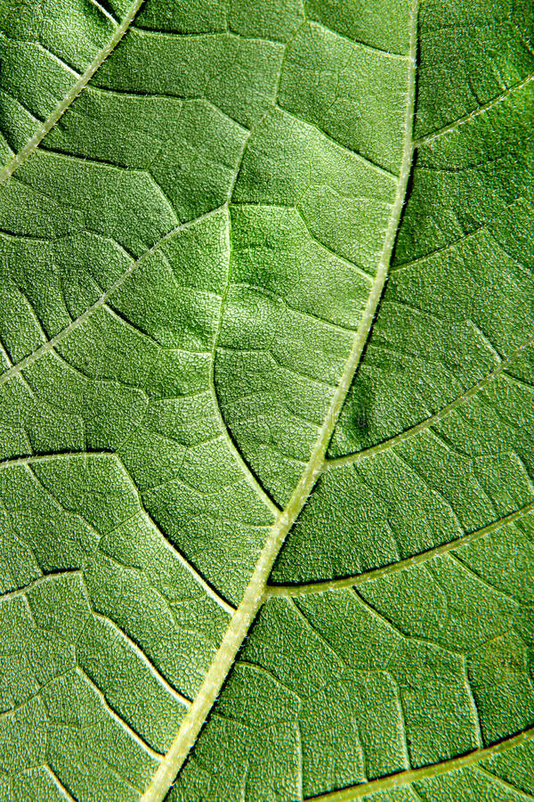 Grünes Blatt-Makro lizenzfreie stockfotos