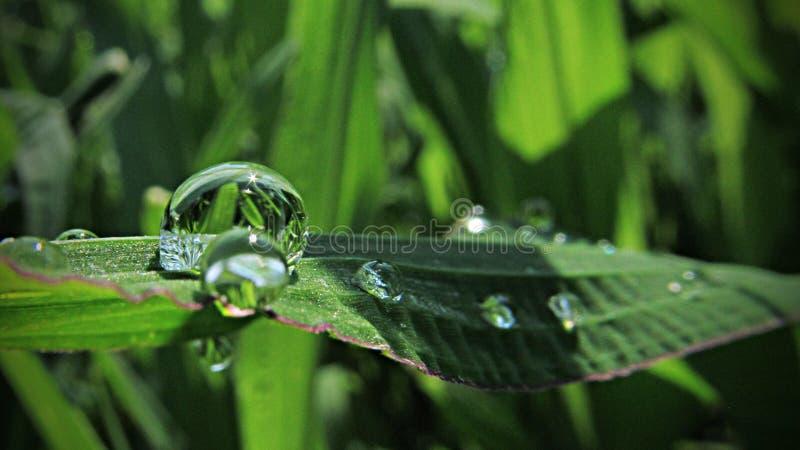 Grünes Blatt mit einem großen Wassertropfen Wassertropfen im Gras an der Dämmerung stockfoto