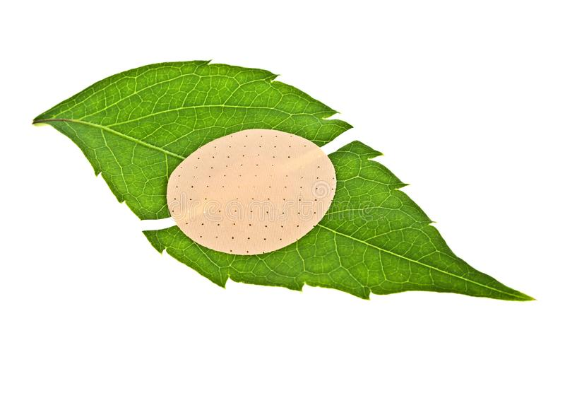 Grünes Blatt mit klebendem Pflaster, auf weißem Grund isoliert lizenzfreie stockbilder