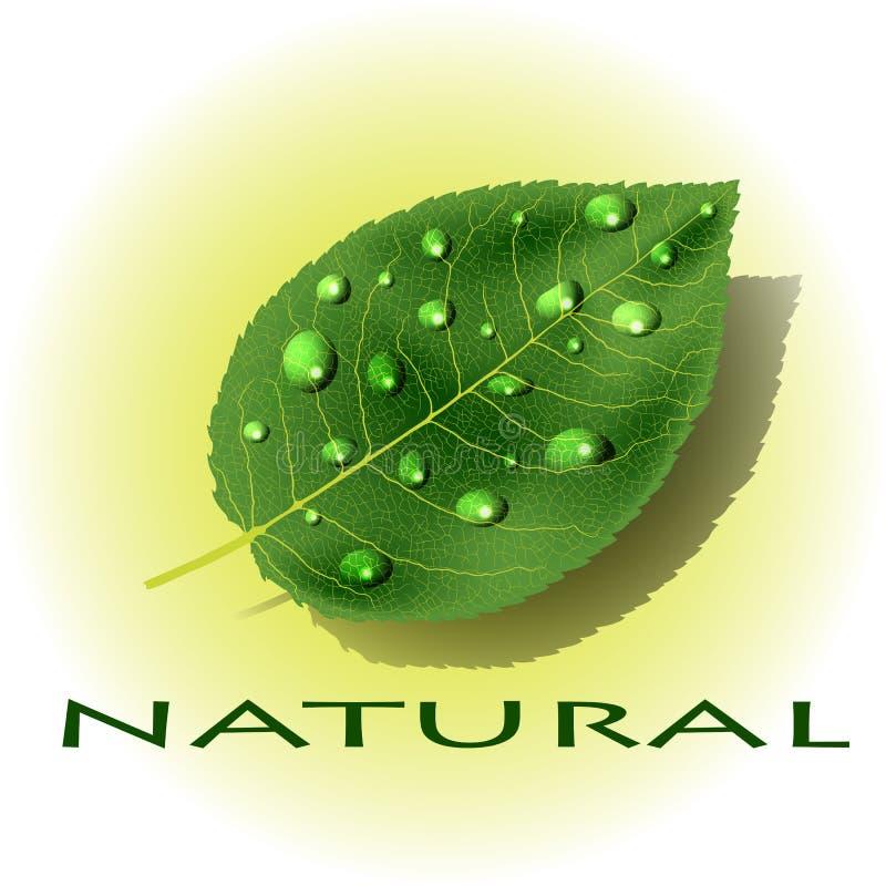 Grünes Blatt mit Tau-/Regentropfen stockbilder