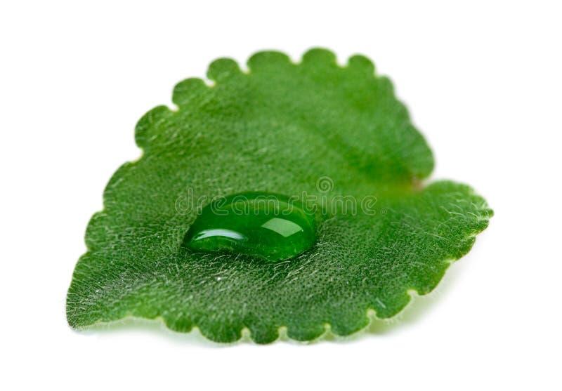 Grünes Blatt mit Wasser lässt Makro fallen lizenzfreie stockfotos