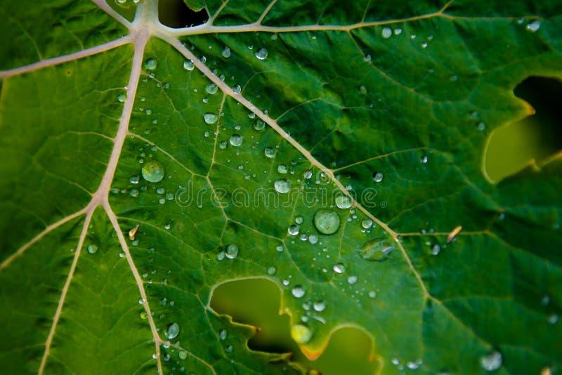 Grünes Blatt mit Wasser-Tropfen auf Oberfläche stockfoto