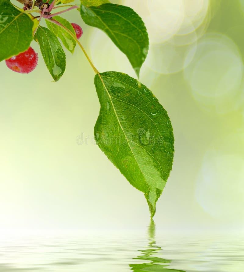 Grünes Blatt mit Wassertropfen lizenzfreie stockfotos