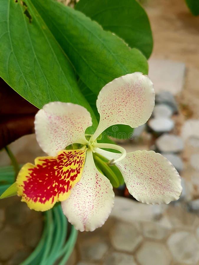Grünes Blatt und Blume stockbilder