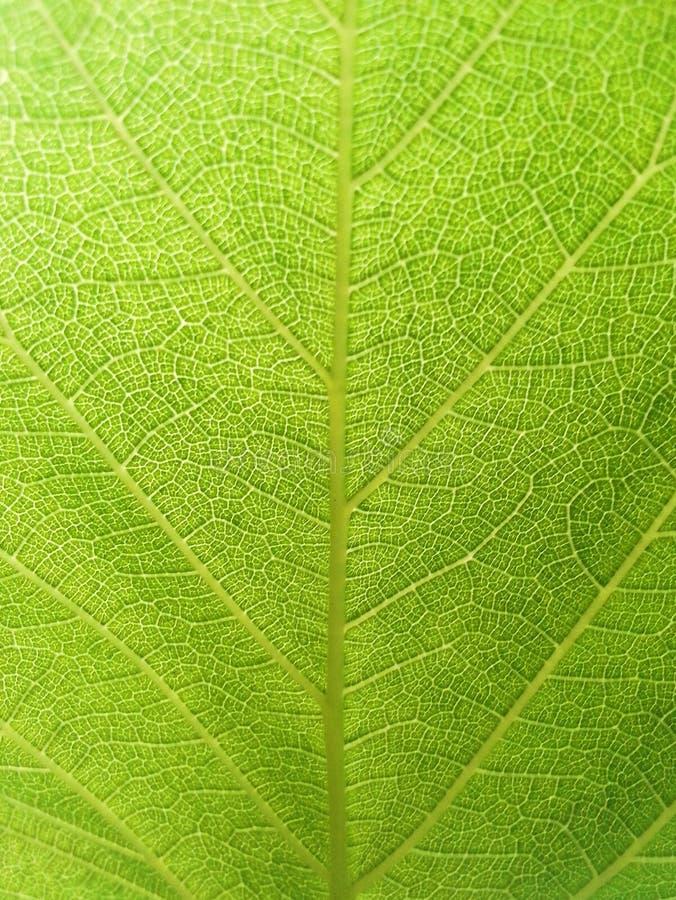 Grünes Blattdetail lizenzfreie stockbilder