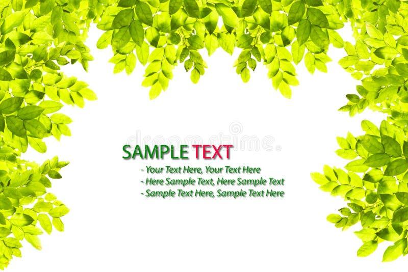 Grünes Blattfeld getrennt lizenzfreie abbildung