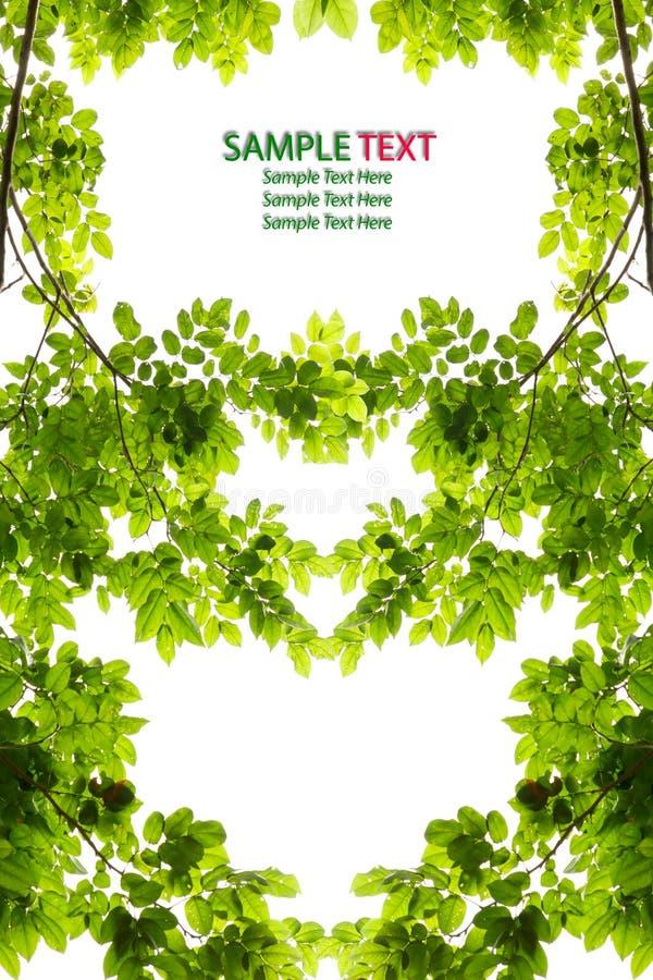 Grünes Blattliebesinnerfeld getrennt vektor abbildung