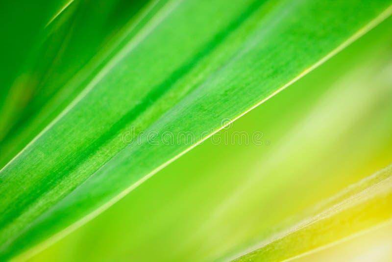 Grünes Blattmuster in der Natur stockbild