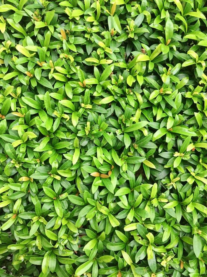 Grünes Blumengras stockfotografie