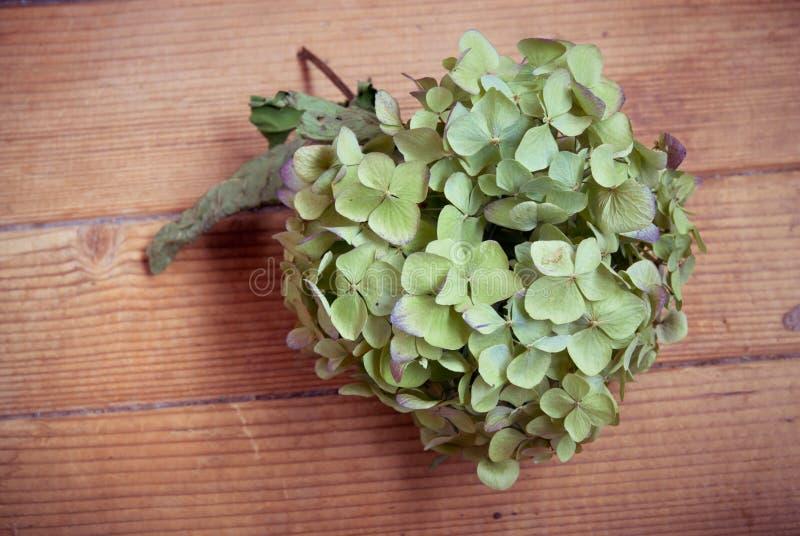Grünes Blumenherz auf dem hölzernen Hintergrund lizenzfreies stockfoto