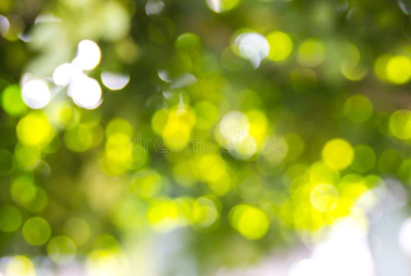 Grünes bokeh vom Baum stockbilder