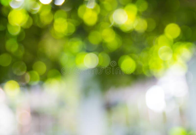 Grünes bokeh vom Baum, stockfoto