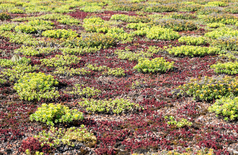 Grünes Dach lizenzfreies stockfoto
