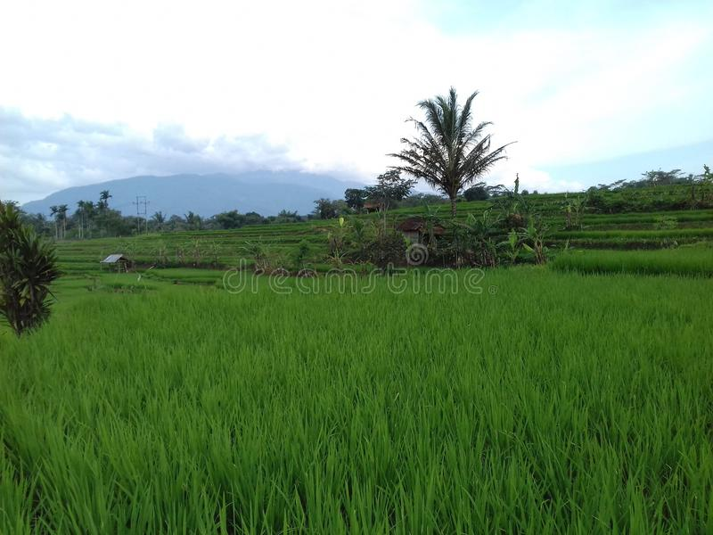 Grünes Dorf stockfotos