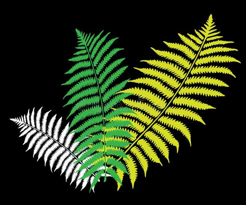 Grünes Farnblatt lizenzfreie abbildung