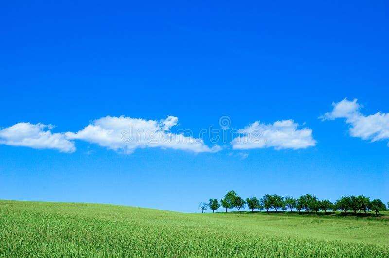 Grünes Feld 4 Lizenzfreies Stockbild