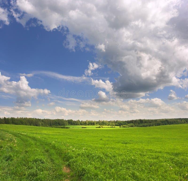 Grünes Feld stockfotos