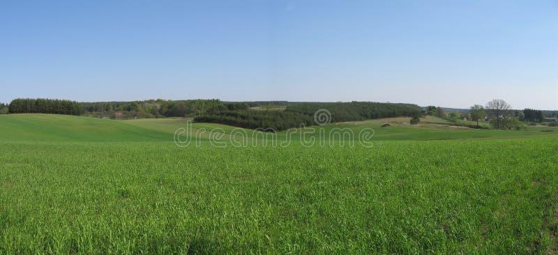 Download Grünes Feld stockfoto. Bild von europa, korn, landwirtschaft - 869494