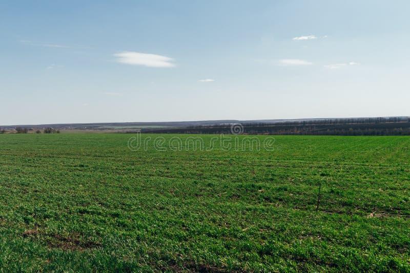Grünes Feld Der Wald im Hintergrund Spätherbst Jagd bewölkter Tag stockbild