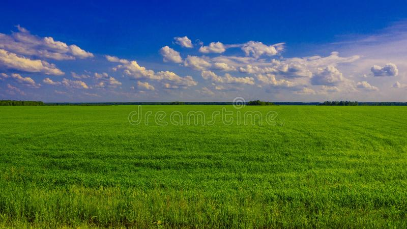 Grünes Feld an einem sonnigen Tag stockbilder