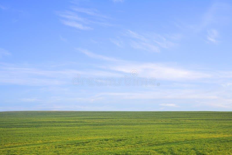 Grünes Feld gegen blauen Himmel stockbilder