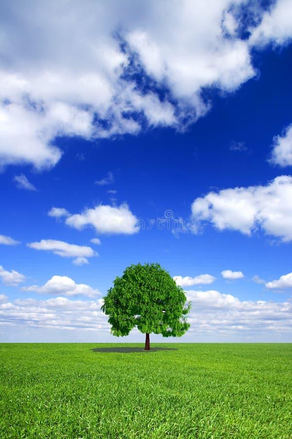 Grünes Feld, Himmel, einsamer Baum stockbild