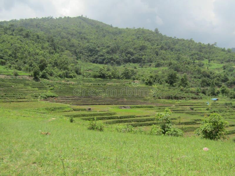 Grünes Feld im mittleren von Bergen stockfoto