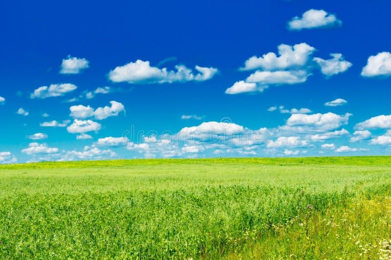 Grünes Feld mit blühenden Blumen und blauem Himmel stockfotos