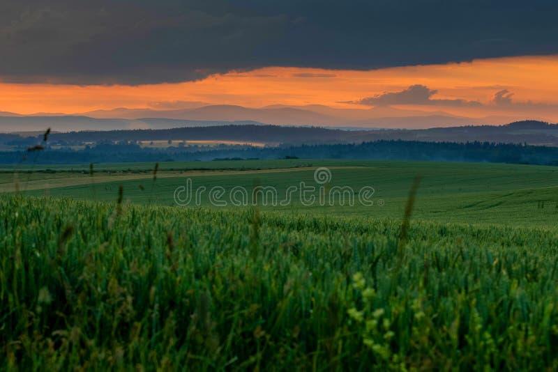 Grünes Feld mit rotem Sonnenuntergang und Bergen auf Horizont lizenzfreie stockbilder