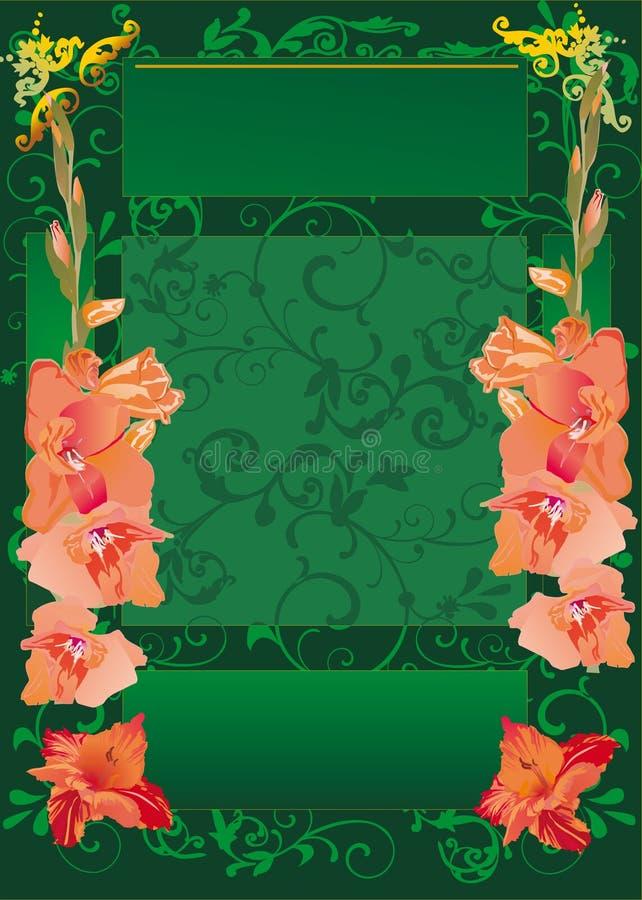 Grünes Feld mit roten Gladiolusblumen vektor abbildung