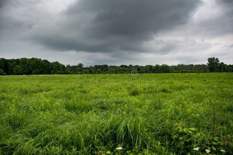 Grünes Feld mit Sturmwolken stockbild