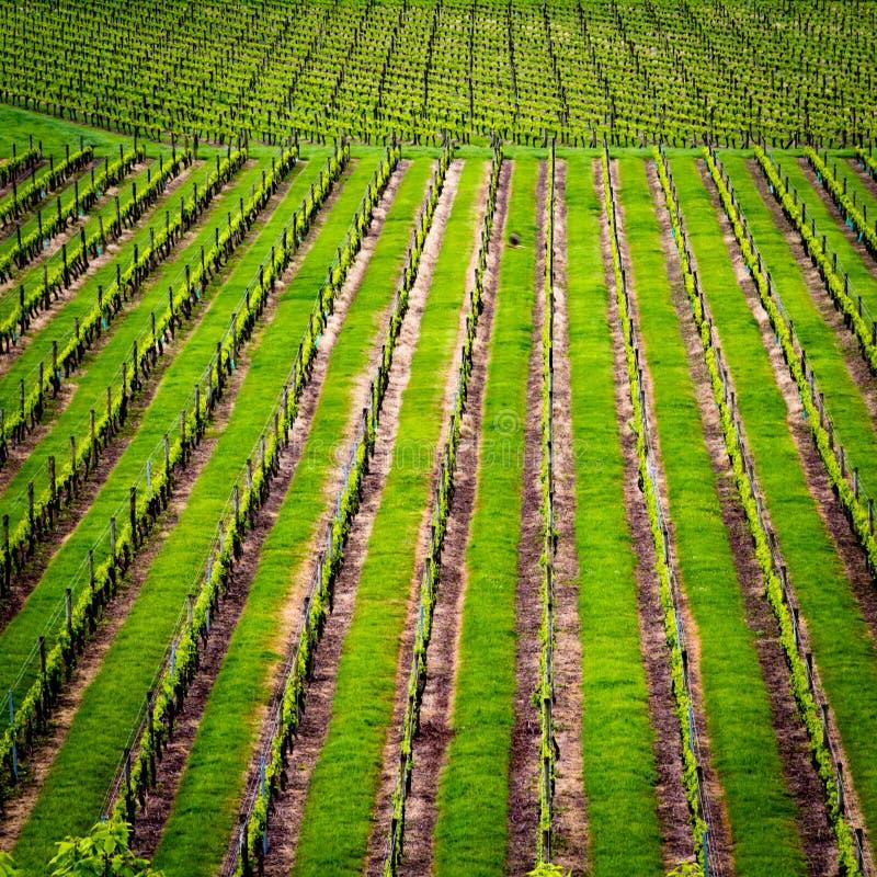 Grünes Feld Neuseeland lizenzfreie stockbilder