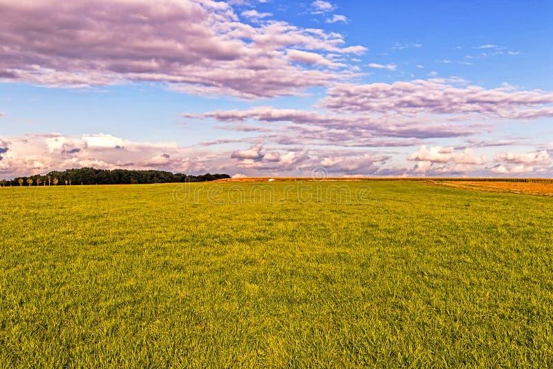 Grünes Feld am Sonnenuntergang stockbild