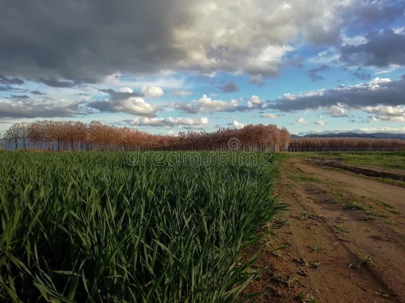 Grünes Feld am Tageslicht lizenzfreie stockfotos